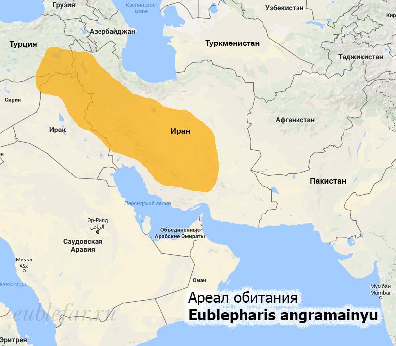 Ареал обитания иранского эублефара
